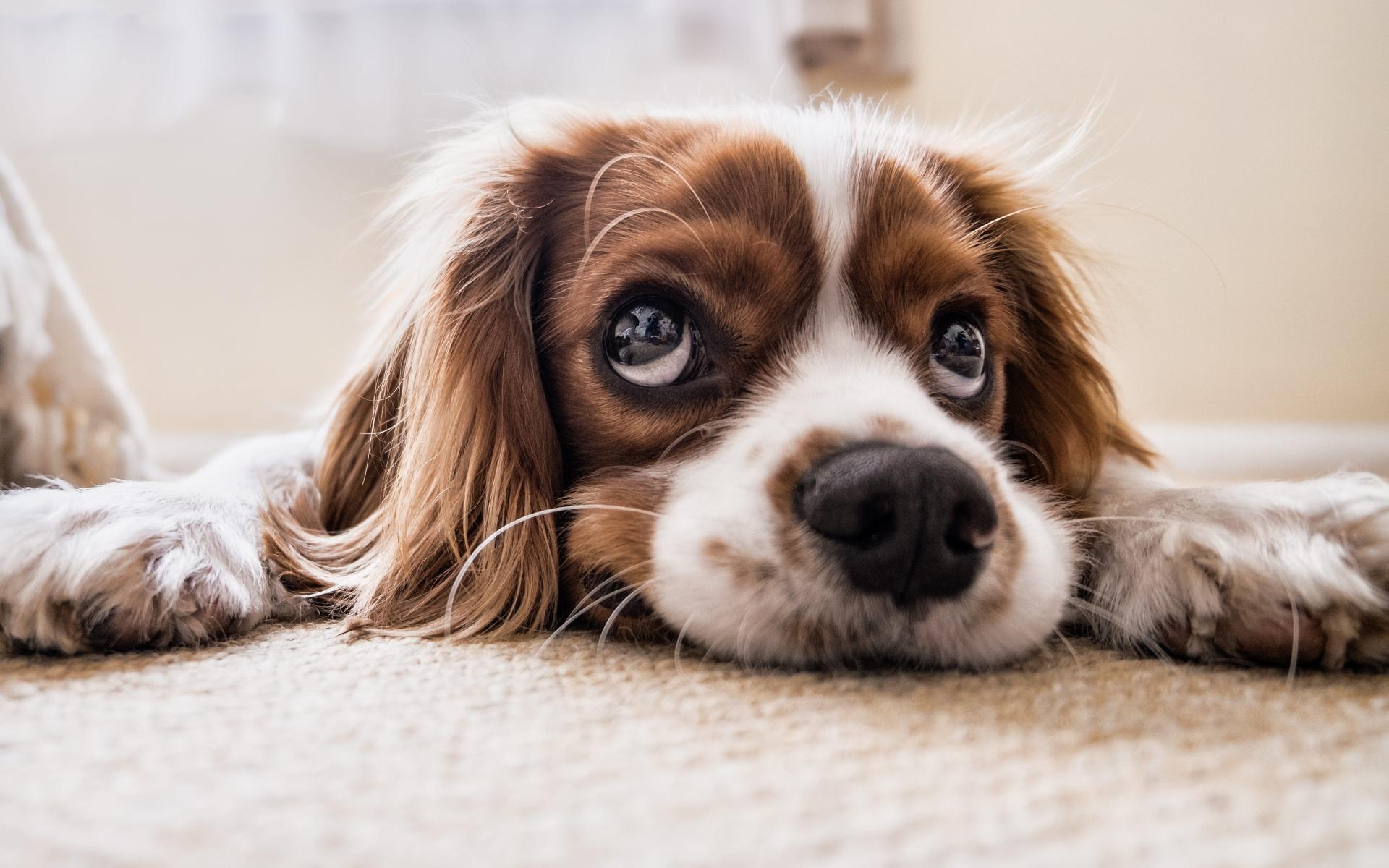 8 Tipps, um depressive Haustiere aufzumuntern